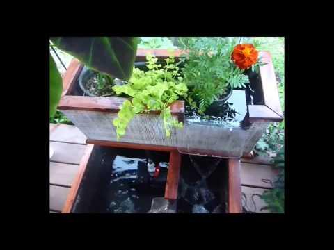 Deck Ponds , Zen Gardens By Great Lakes Tilapia