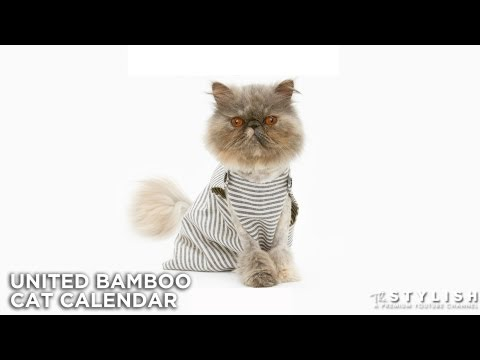 SUPERCATS: UNITED BAMBOO CAT CALENDAR