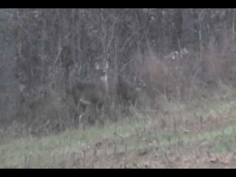 Rockingham County, NC. 4:56. Footage from Our Farm.