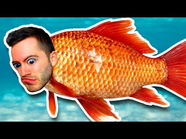 SOMETHING'S FISHY (Prop Hunt)
