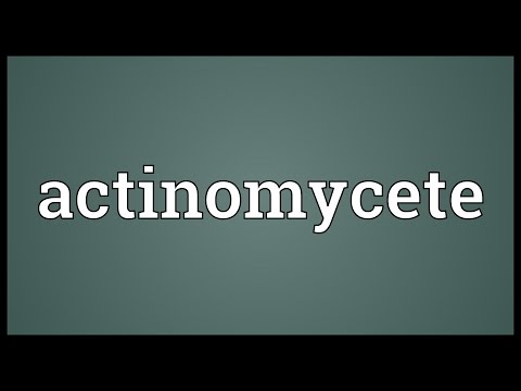 Header of actinomycete