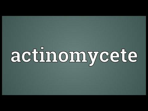 Header of actinomycete