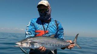 mackerel fishing moreton bay brisbane