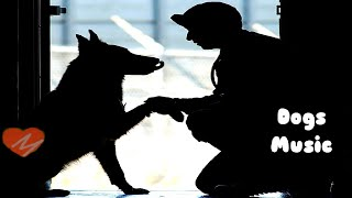 música clássica para curar cães e gatos doentes, sons relaxantes pela cura de um animal