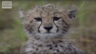 Cute Cheetahs Learn To Hunt! | Amazing Animal Babies | Earth Lab