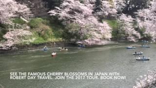 2017 Cherry Blossom Japan Tour - Robert Day Travel