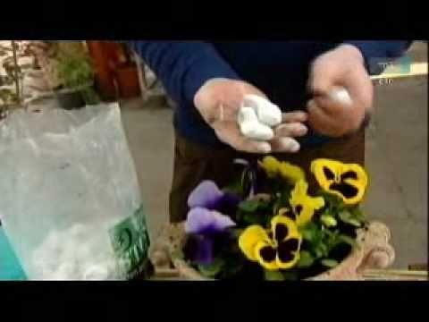 Kerttervezési tippek: árvácska ültetése kaspóba