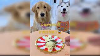 Fun with Dogs Funny Dog's