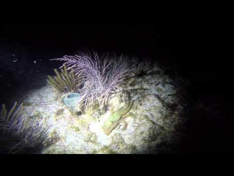 Night Dive with Key Dives