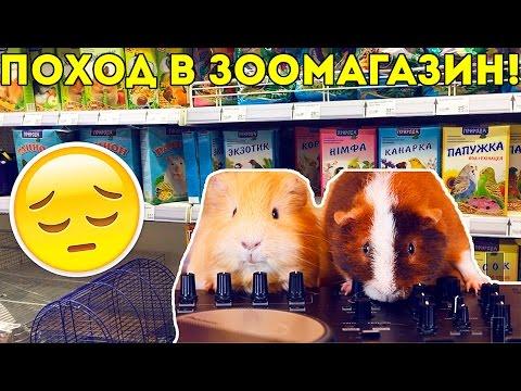 Пример Плохого Зоомагазина / ВЛОГ / Свинки Шоу / SvinkiShow
