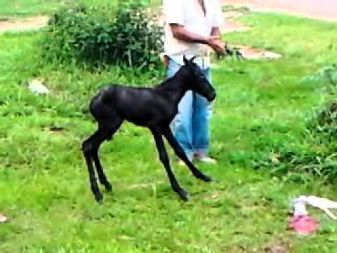 Filho De Uma égua video