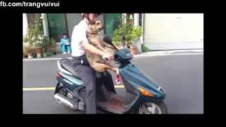 Video clip quay lén chở gấu cờ hó đi chơi phố