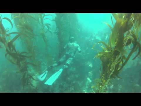 Catalina Island Spearfishing and Freediving 2012 Edition