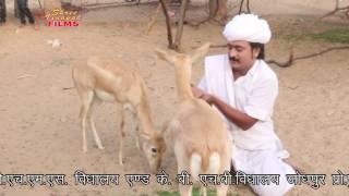 Vishanoi Lage Futro॥ Latest Marwadi Dj Rajasthani Song 2017