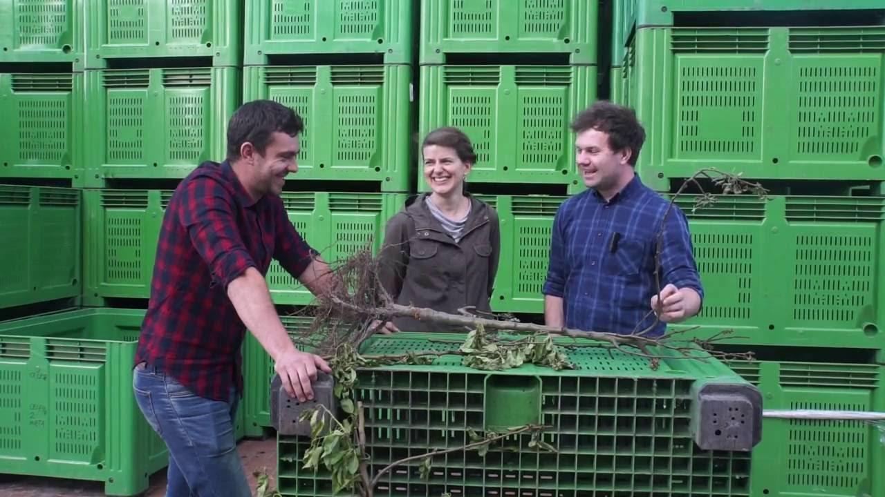 forum sadownicze, uprawa gruszek