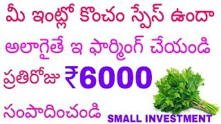 Small Business ideas 2018 : Coriander Farming Business | Kothimeera | Earn money at home | in telugu