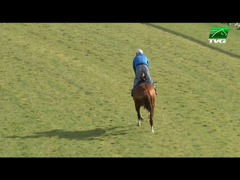 Kentucky Derby Winner California Chrome Takes Test Drive Over the Turf
