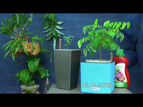 Einpflanzen Zimmerpflanzen entdecke die Möglichkeiten im Pflanzenreich