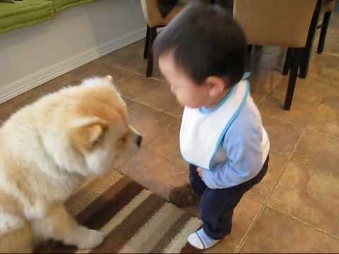 Baby making interesting conversation with dog