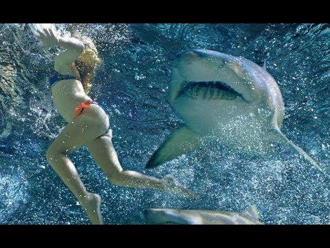Cá mập hung hăng tấn công  -  những chú cá mập hung hăng 😅😅😅