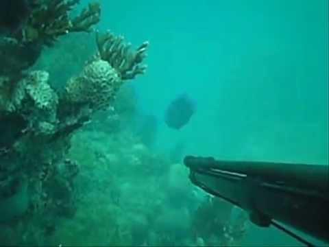 Pesca Sub - Alcoba�a (EQUIPE TIRO SUB)