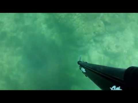 Pesca Sub em Ferragudo