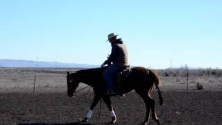 Shoulder Control on Your Horse
