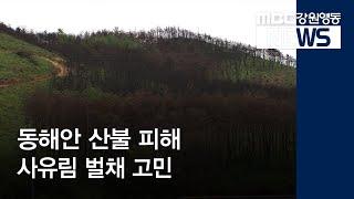 R]동해안 산불 피해 사유림 벌채 고민