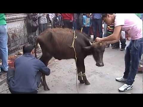 Feel Their Pain & Fear. Stop Animal Cruelty