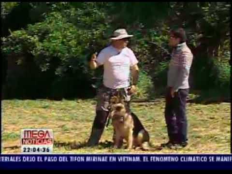 Protección Personal - Perros de seguridad