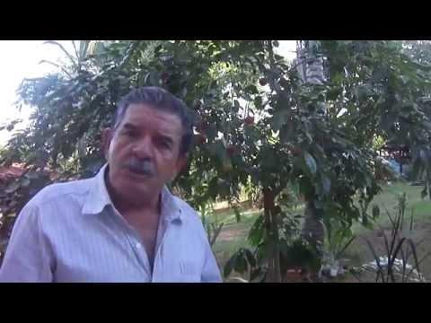 Conheça o Dovyalis Doce uma frutinha rara e especial mostada por Farias