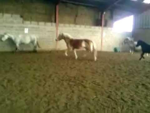 Centre équestre de marsat ( les poneys)