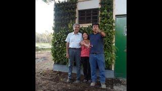 como instalar jardín vertical