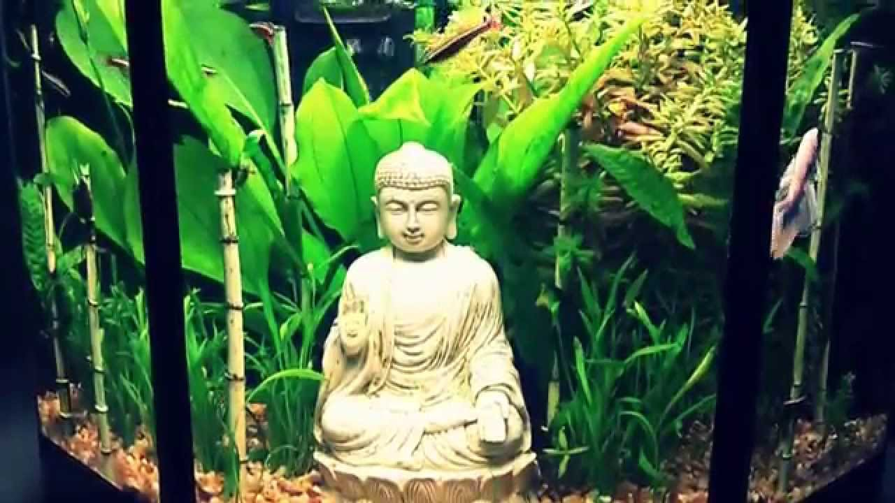 Betta Tank Setup The Hidden Bamboo Garden Amp White Half