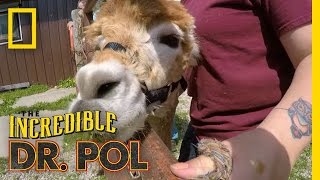 The Incredible Dr. Pol - New Trailer | | The Incredible Dr. Pol