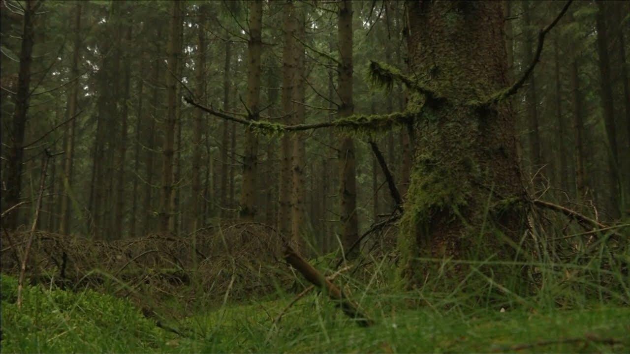 """Здравствуй, дерево! Чему мы научимся у """"интернета растений""""?"""