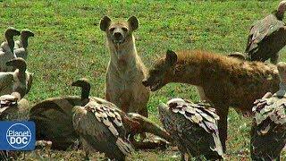 Serengeti National Park - Part 1