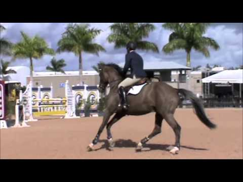 Pontifox, Equitation Horse for sale, WEF 2013 SOLD
