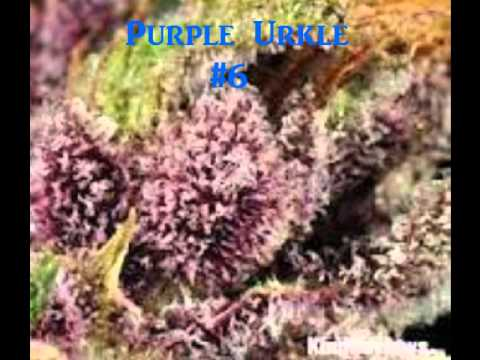 Top 10 Best Weed Strains 2012
