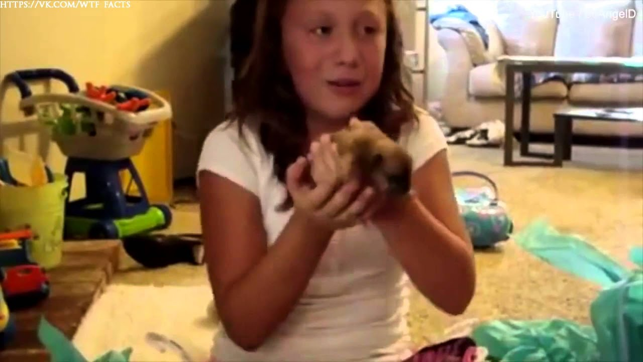 Реакция детей на подарок животных