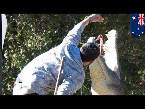 Crocodile attack: handler dragged into water during crocodile feeding show