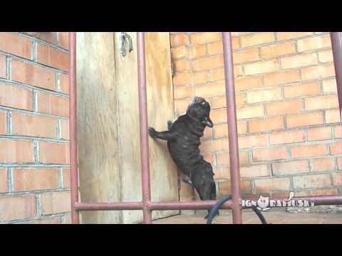 Open the f***ing door! (Да откройте же эту чертову дверь!)