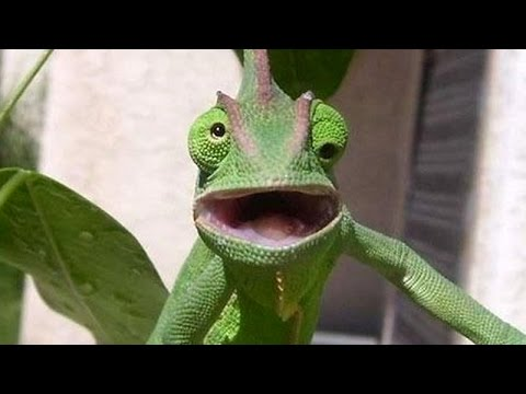 Funny animals make you happy and laugh- Funny animal compilation