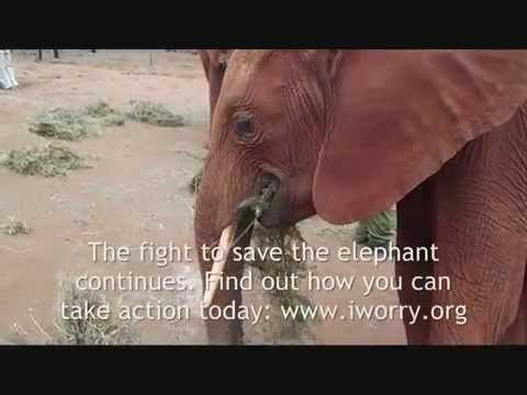 Elephant Orphans in Kenya - The Story of Mbegu