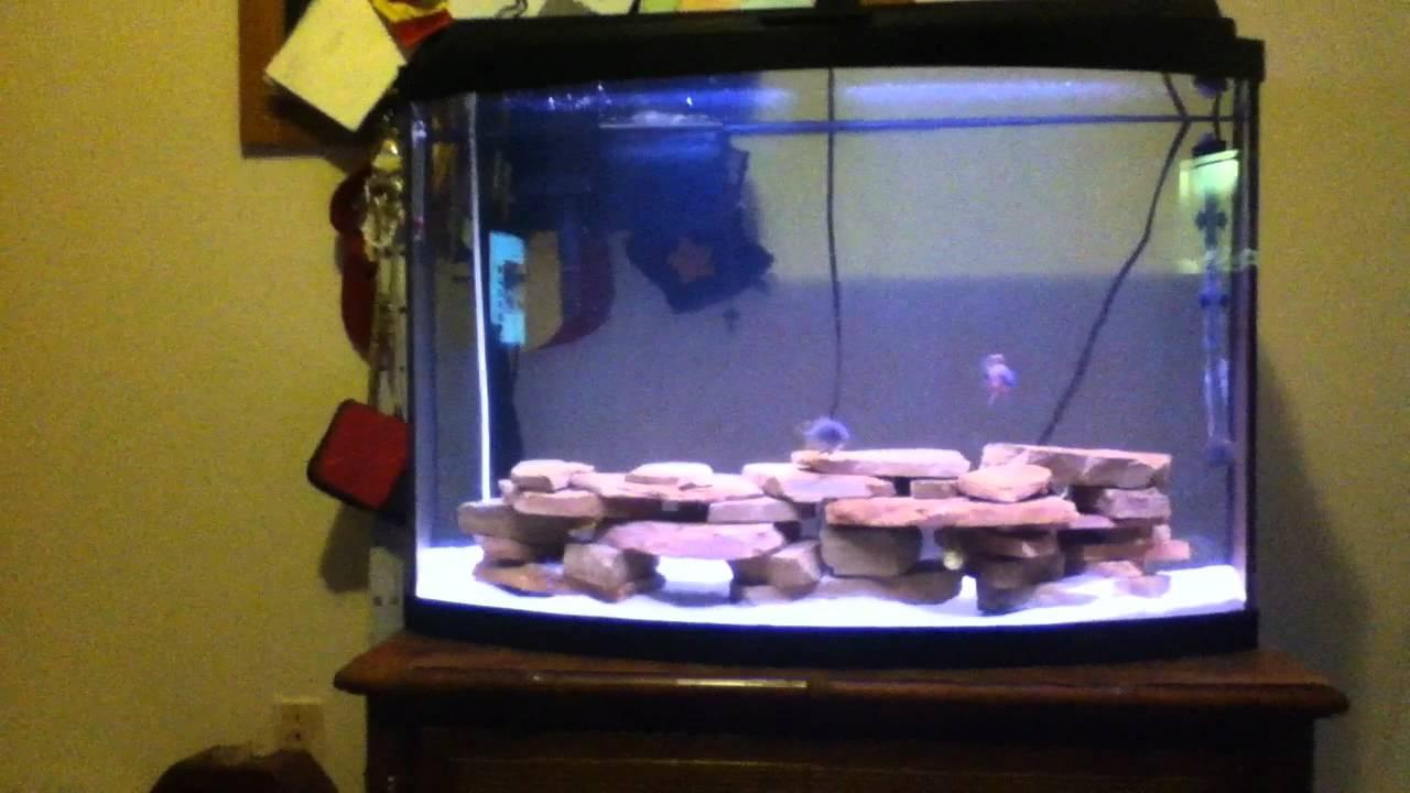Cichlid Fish Tank African Cichlid Fish Tank