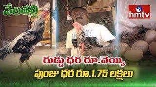 పర్లా జాతి కోళ్ల పెంపకం | Perla Jathi Poultry Farming Guide | Nela Talli | hmtv