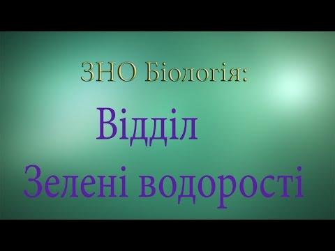 ЗНО Біологія  Відділ Зелені водорості