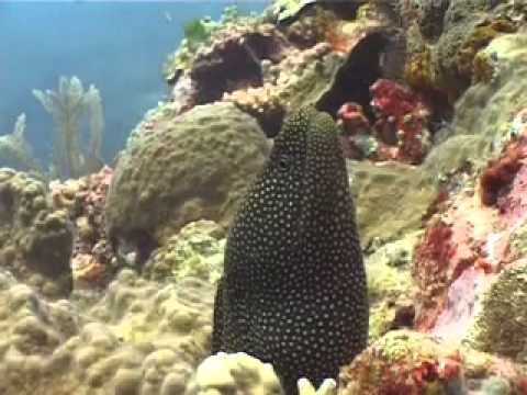 Diving Suluwesi - Reef Life of Bunaken Island with Two Fish Divers