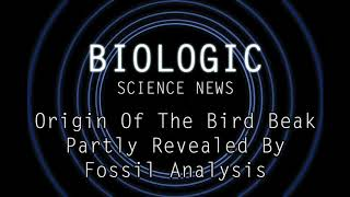 Science News - Origin Of The Bird Beak Partly Revealed By Fossil Analysis