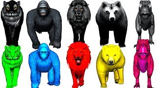 wild animals finger family song for kids   nursery rhymes,children,toddlers,colors,NASH TOON Tv